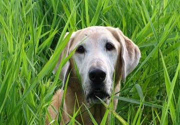 Should You Use Supplements for Your Lame and Arthritic Pets?