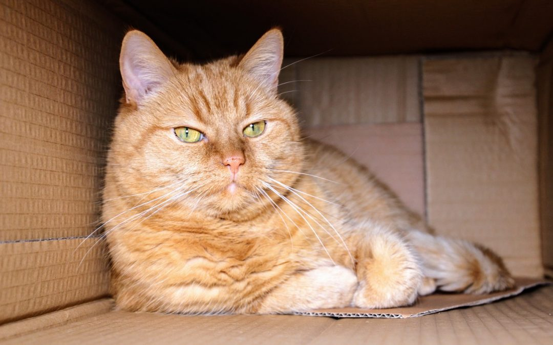 Fluffy or Flabby? How to Prevent or Manage Pet Obesity and Optimize Your Dog or Cat's Nutrition