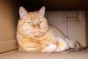 cats love boxes and urinate in clean boxes so you can reduce inappropriate urination by using a clean box