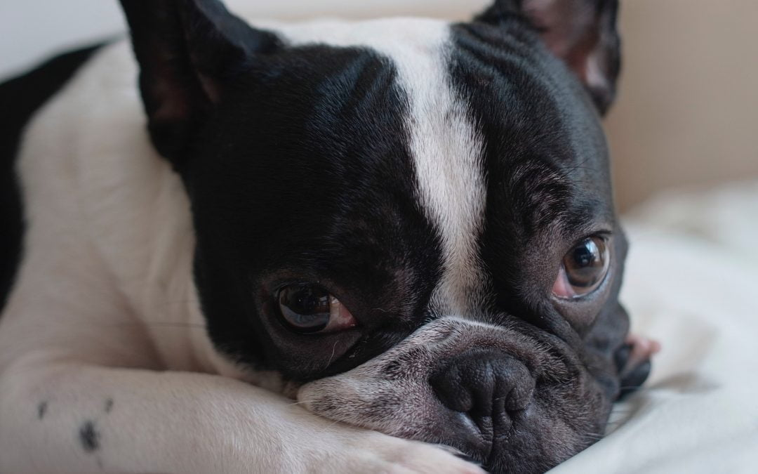What You Can Do For Your Dog or Cat Having Seizures