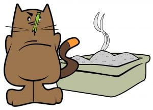 smelly litter box and litter aversion is a common cause for inappropriate elimination