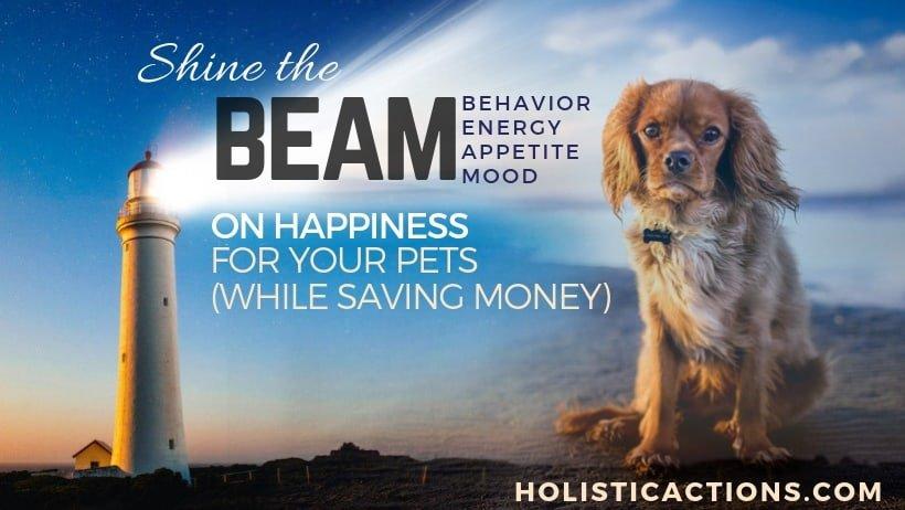beam, pet health, holistic pet care