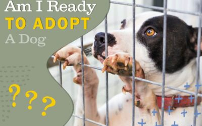 """Dreaming of Adopting a Dog? Push """"Paws"""" Till You've Considered These Five Crucial Questions"""