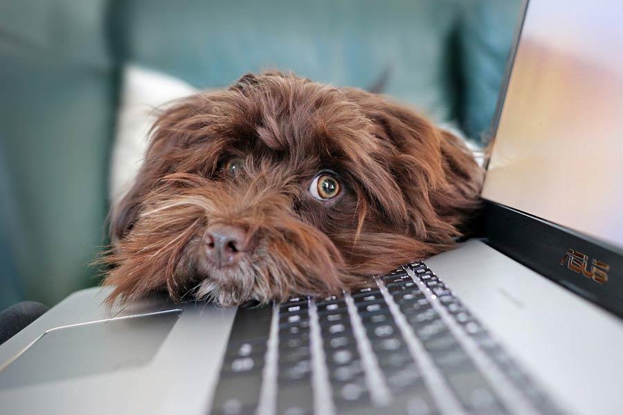 adopt dog, dog rescue, holistic actions, should I get a dog