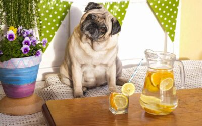 3 Simple Tips to Help Your Hypothyroid Dog