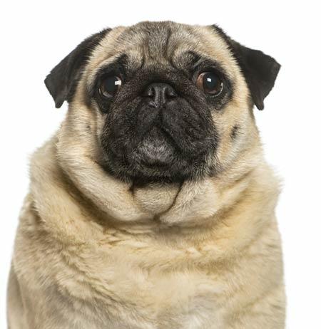 hypothyroid dog, holistic pet care