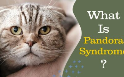 Your Cat's Urinary Problems Are NOT Inevitable