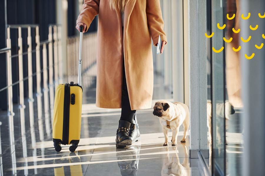 travel with pets, fly with dog, fly with cat