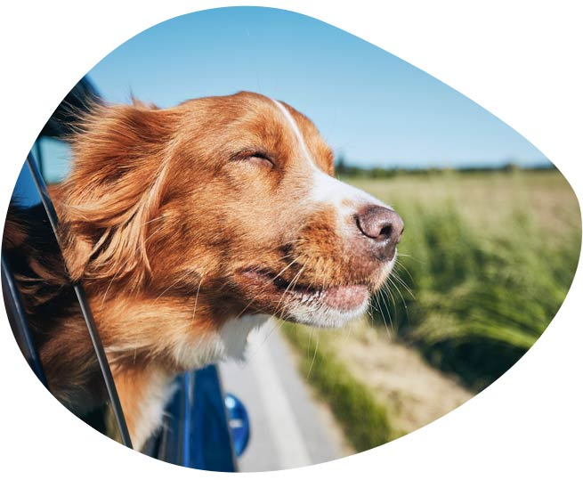 pet travel, dog travel