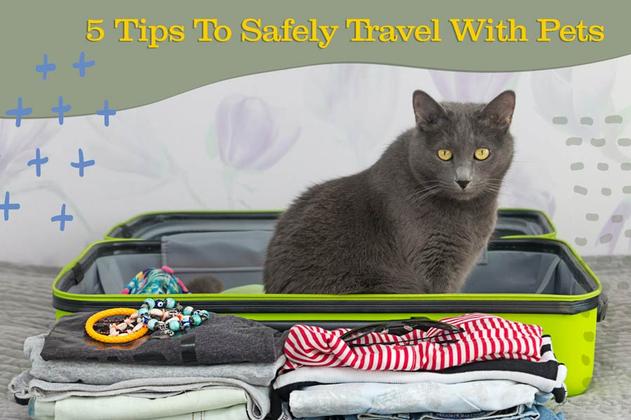 How to Safely and Happily Travel With Your Pet: Five Steps for an Adventure of a Lifetime!