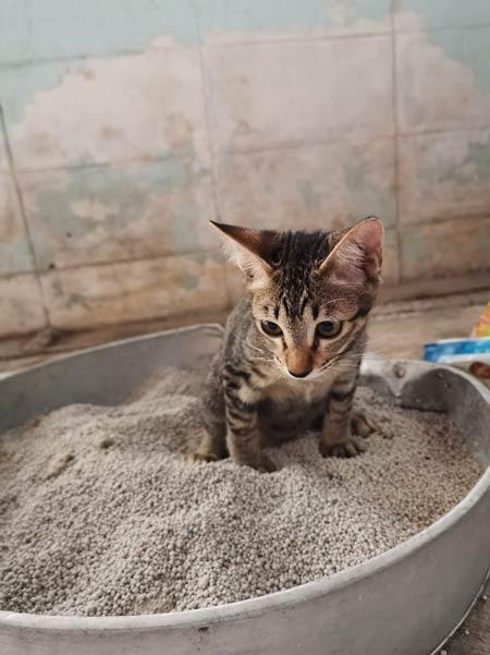 urinary problems, cystitis, cat urinary, litter box, holistic pet care