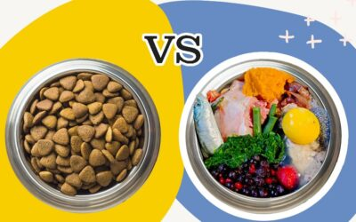 What Should I Feed My Pets? The Pet Food Dilemma