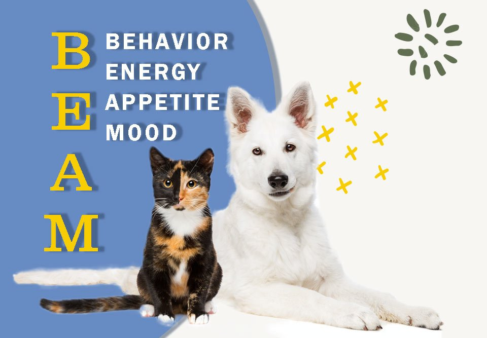 How to Optimize Your Pet's Quality of Life Using BEAM