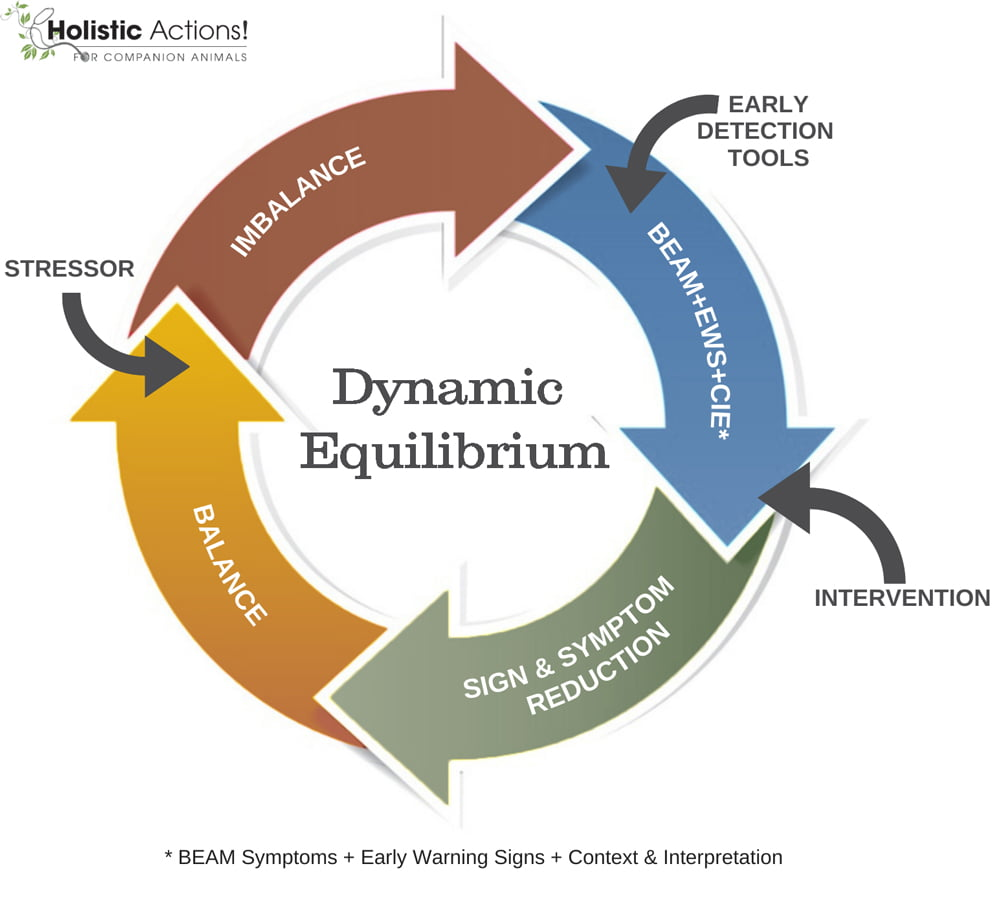 homeostasis, health, homeopathy, dynamic equilibrium, vitality and balance