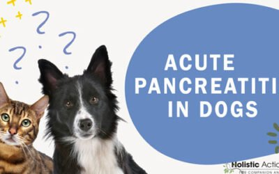 What Causes Acute Pancreatitis In Dogs