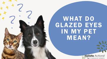 FAQ: What do glazed eyes in my pet mean?