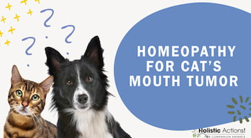 What Homeopathic Remedy Can Treat a Cat's Mouth Tumor?