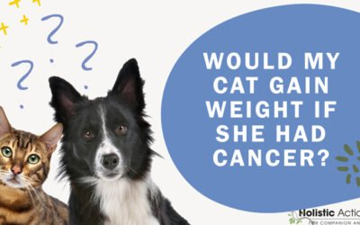 FAQ: Would My Cat Gain Weight if She Had Cancer?