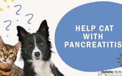 FAQ: How Can I Help My Cat With Pancreatitis