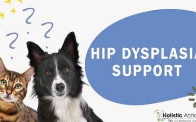 How Can I Help My Dog With Hip Dysplasia Feel More Comfortable?