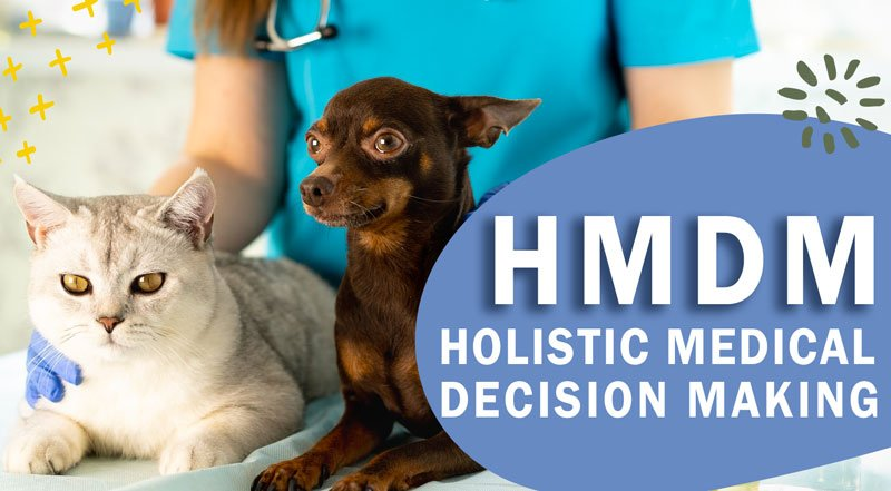 Suffering from decision fatigue? HMDM to the rescue