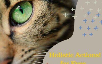 Feline Conjunctivitis