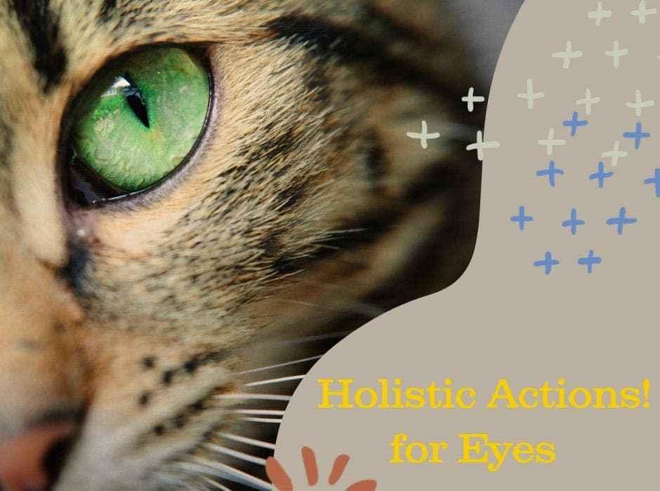 feline conjunctivitis, inflammation, holistic pet care, supplements, fresh diet, healthy pet