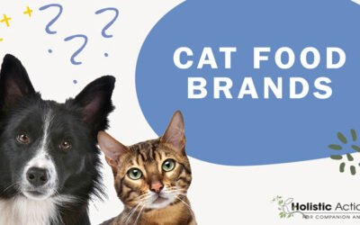 What Cat Food Brands Would You Recommend?