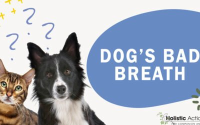 How Do I Cure My Dog's Bad Breath?