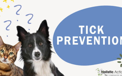 What Is The Best Way to Prevent Ticks?