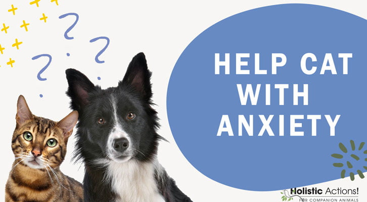 What Natural Methods Can I Use to Help My Cat's Anxiety?