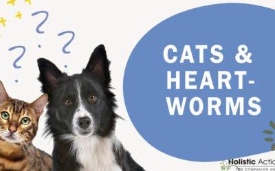 How Do Cats Get Heartworms?