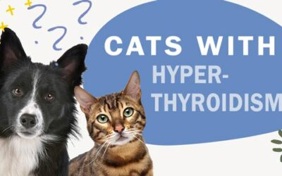 What are the Common Symptoms of Hyperthyroidism in Cats?