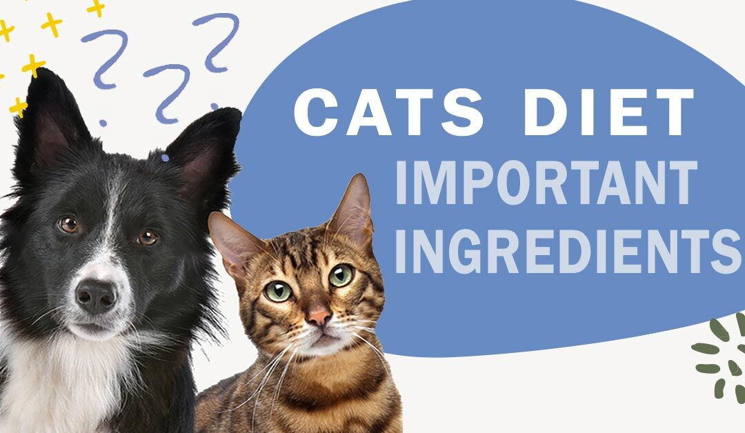 What Ingredients Are Important to Incorporate into My Cat's Diet?