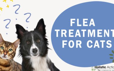 What Flea Treatments are the Safest for Cats?