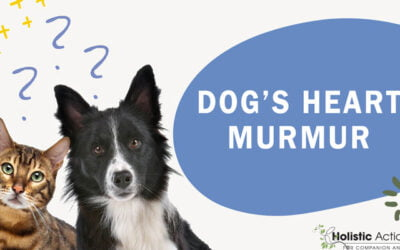 Can My Dog's Heart Murmur Lead To Congestive Heart Failure?