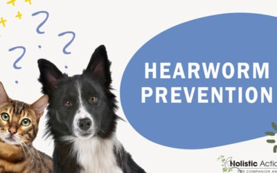 Are There Any Natural Preventatives for Heartworms?