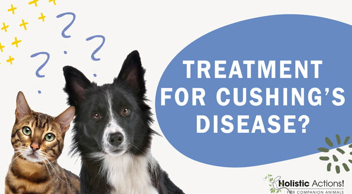 Are There Treatment Options For Cushing's Disease?