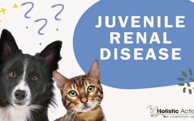 How does juvenile renal disease affect dogs?