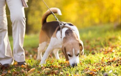 Breathing: A Powerful and Surprising Way to Increase Your Pet's Health and Happiness