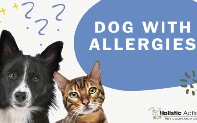 What are The Signs That My Dog May Have Allergies?