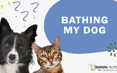 How Often Do I Need to Bathe My Dog?