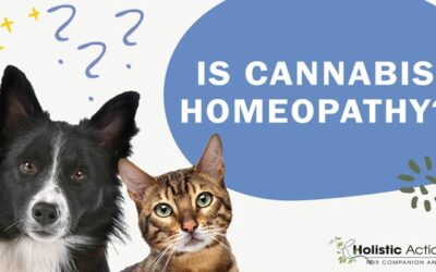 Is Cannabis Oil A Homeopathic Treatment For Cat Cancer?