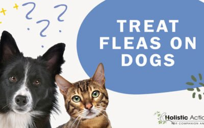What Is The Best Way To Treat Fleas On My Dog?